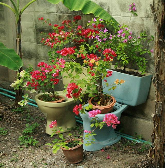 the flowers in a toilet - Flowers For Home Garden