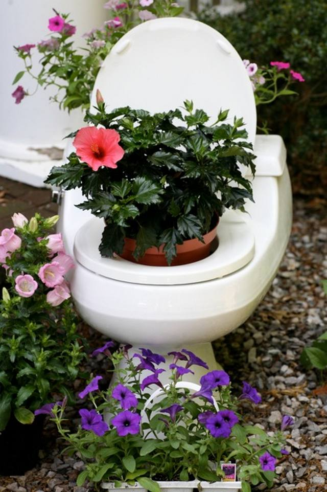 toilet and flowers 11 The Flowers in a Toilet