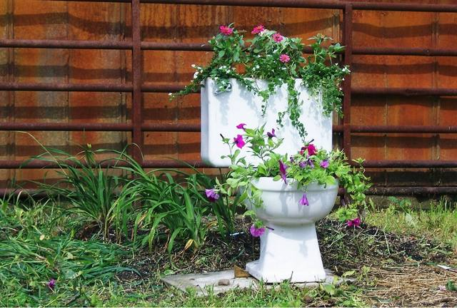 toilet and flowers 2 The Flowers in a Toilet